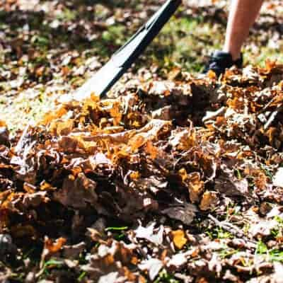 Make Your Own Leaf Mould