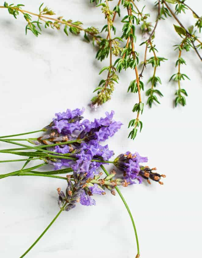 Birds eye view of 8 lavender flowers with stems bunched on a white bench on the lower left with 6 thyme stems at the the top almost reaching the lavender